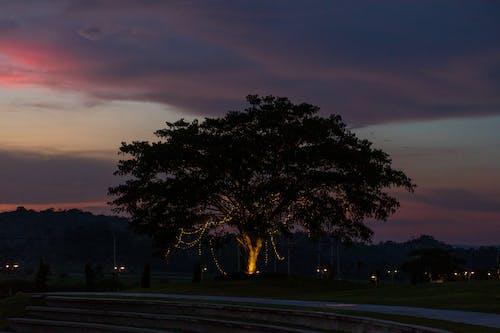 Δωρεάν στοκ φωτογραφιών με δέντρο, νύχτα