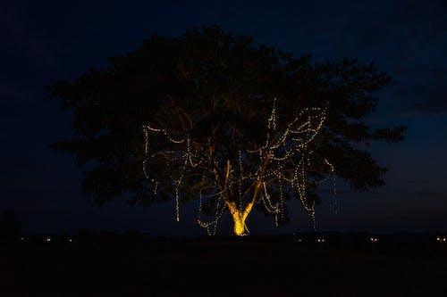 Δωρεάν στοκ φωτογραφιών με δέντρο, ελαφρύς, φώτα νύχτας