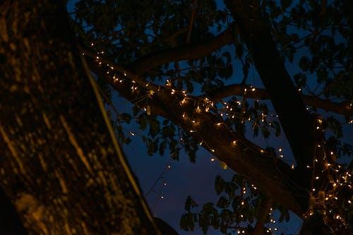 Δωρεάν στοκ φωτογραφιών με δέντρο, ελαφρύς