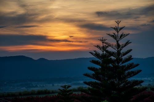 Δωρεάν στοκ φωτογραφιών με Καλημέρα, ουρανός