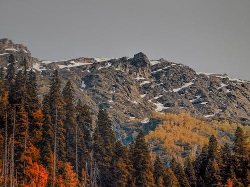 kasol, kheerganga, nat, 丘陵 的 免費圖庫相片
