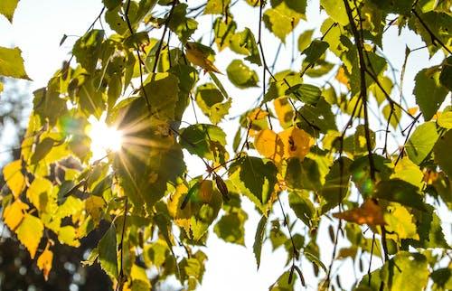 サンスポット, マクロ, 太陽, 晴れの無料の写真素材