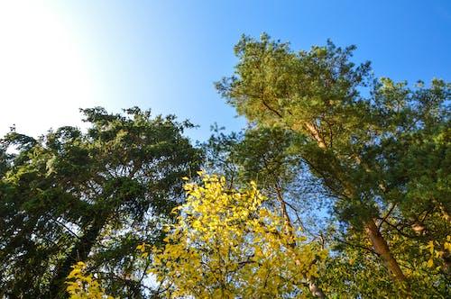 太陽, 太陽の光, 晴れ, 木の無料の写真素材