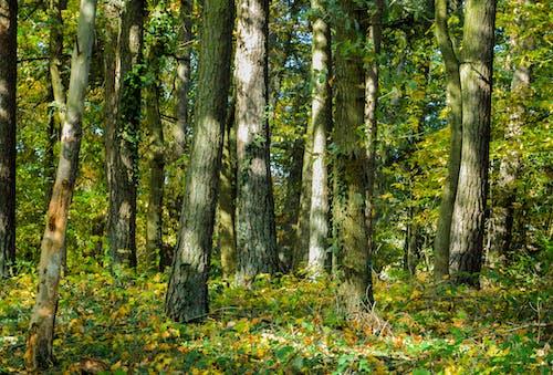 太陽の光, 木, 森の中, 森林の無料の写真素材