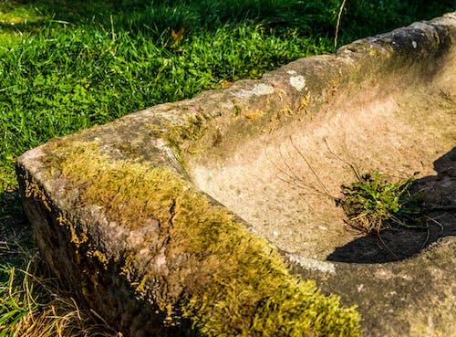 Free stock photo of corner, grass, history, moss