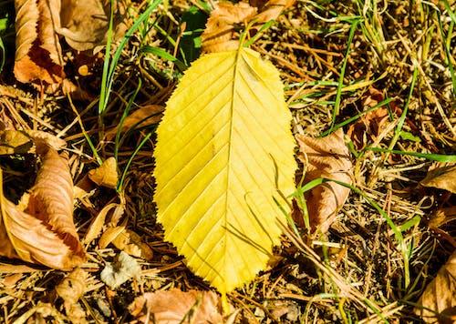 地面, 晴れ, 草, 葉の無料の写真素材