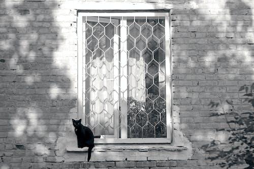 Безкоштовне стокове фото на тему «noir, Будівля, кішка, коти»