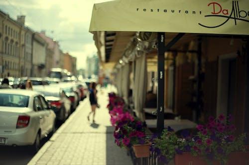 Безкоштовне стокове фото на тему «petersburg, літо, місто, Міський»