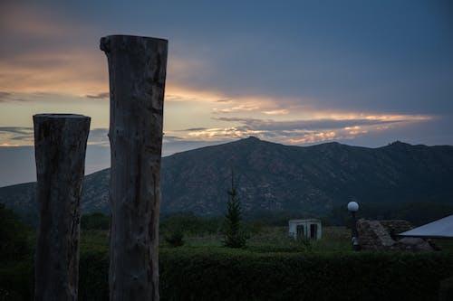 Immagine gratuita di alba, albero, collina, impianti