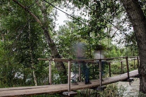 Безкоштовне стокове фото на тему «ліс, люди, Привид, привидів»