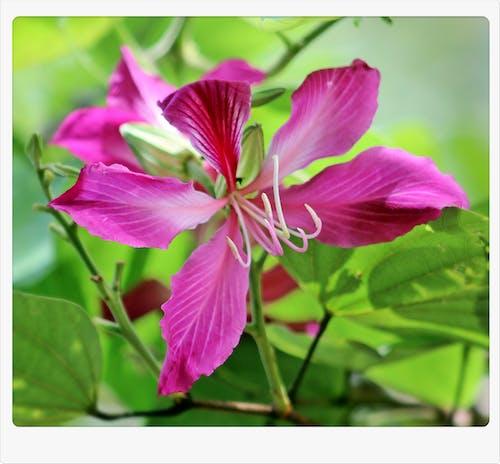 Kostnadsfri bild av den vackra blomman