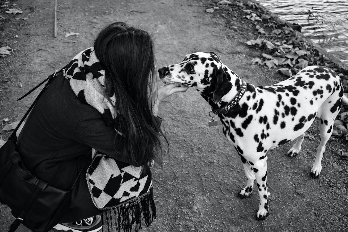 Photo of Woman Touching Dalmatian Dog
