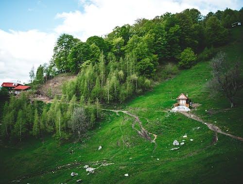 ağaçlar, arazi, ev, kırsal içeren Ücretsiz stok fotoğraf