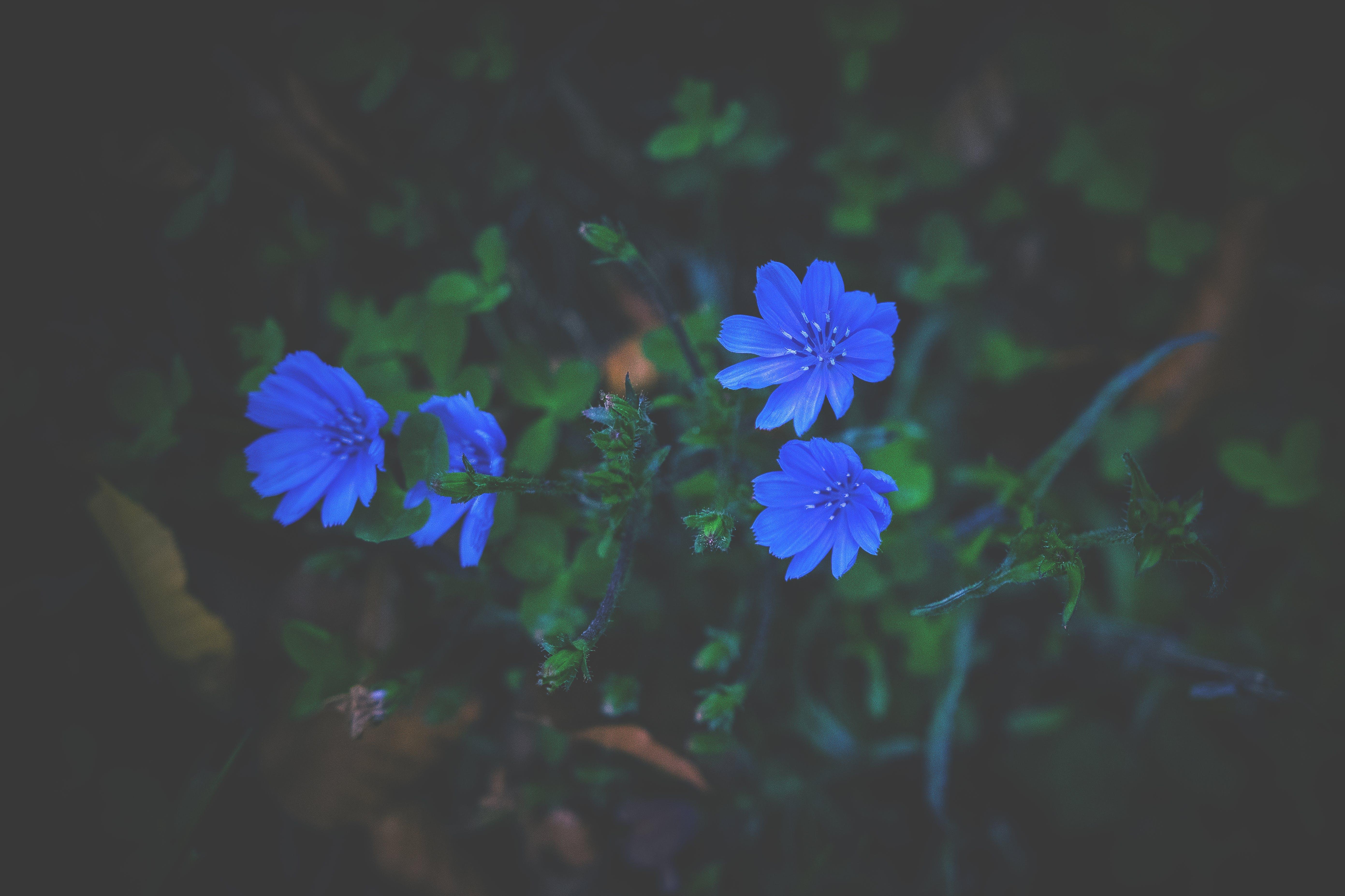 Бесплатное стоковое фото с ботанический, выращивание, выращивать, голубой