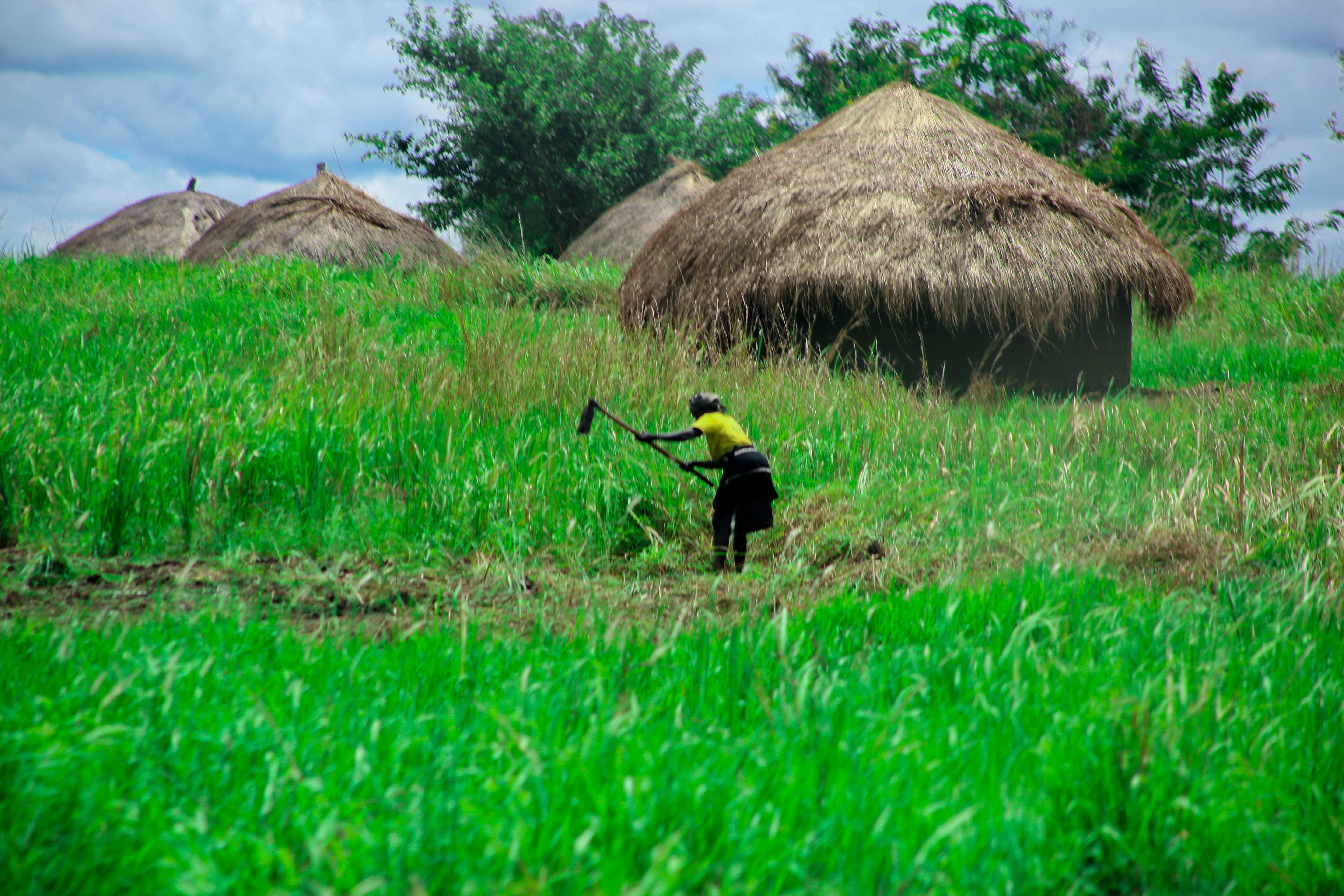 Free stock photo of africa, agricultural, cultivating, farming