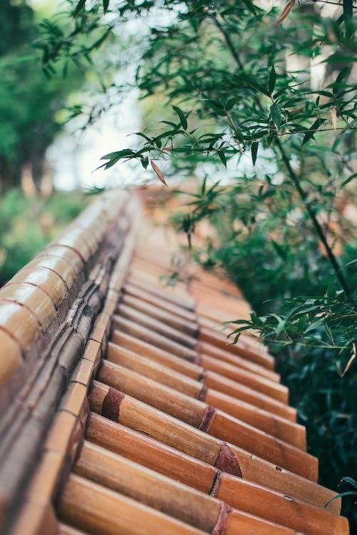 Imagine de stoc gratuită din 公园, 北京, 季节, 屋檐