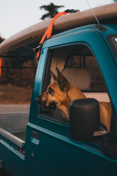 Photograph of a Brown Dog Looking out from a Car Window