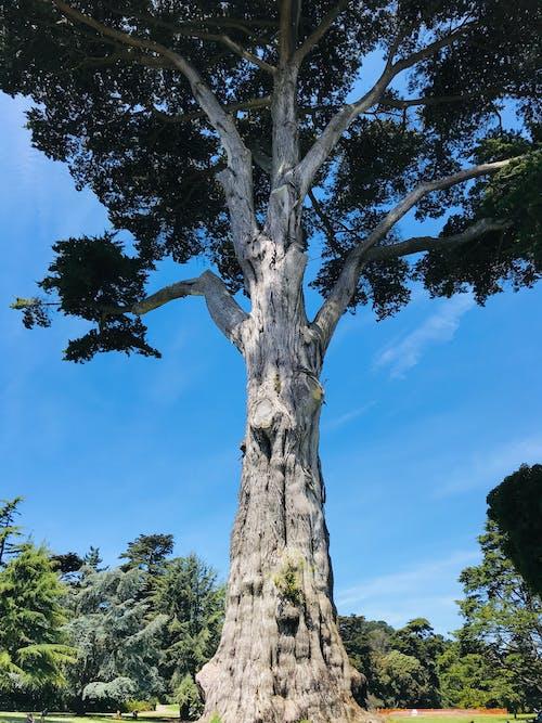Free stock photo of botanical gardens, san francisco, tree