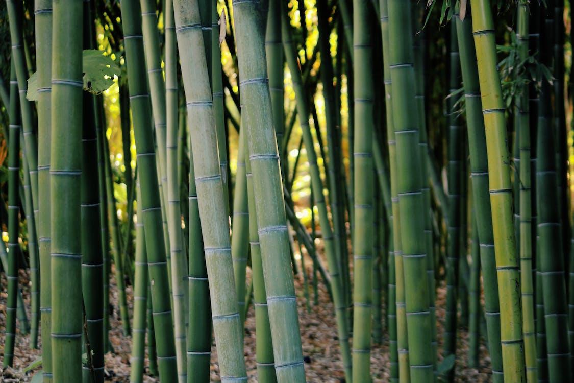 asuminen, bambu, elossa