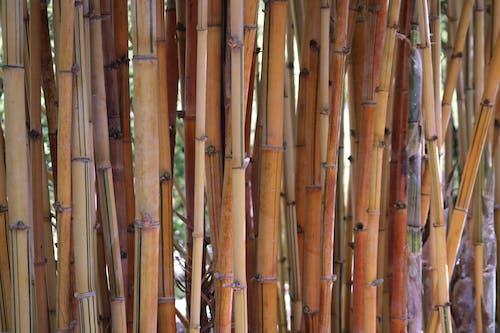 Kostenloses Stock Foto zu am leben, bambus, blatt, blätter