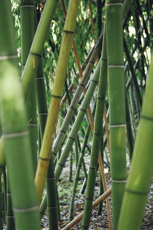 aproape, bambus, complicat