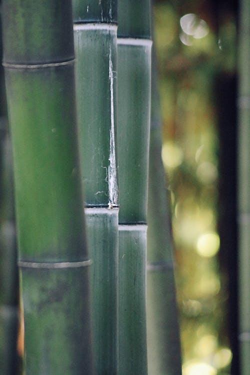 bambou, centrale, complexe