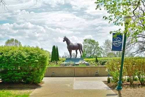 Free stock photo of horse, horse park, kentucky, lexington