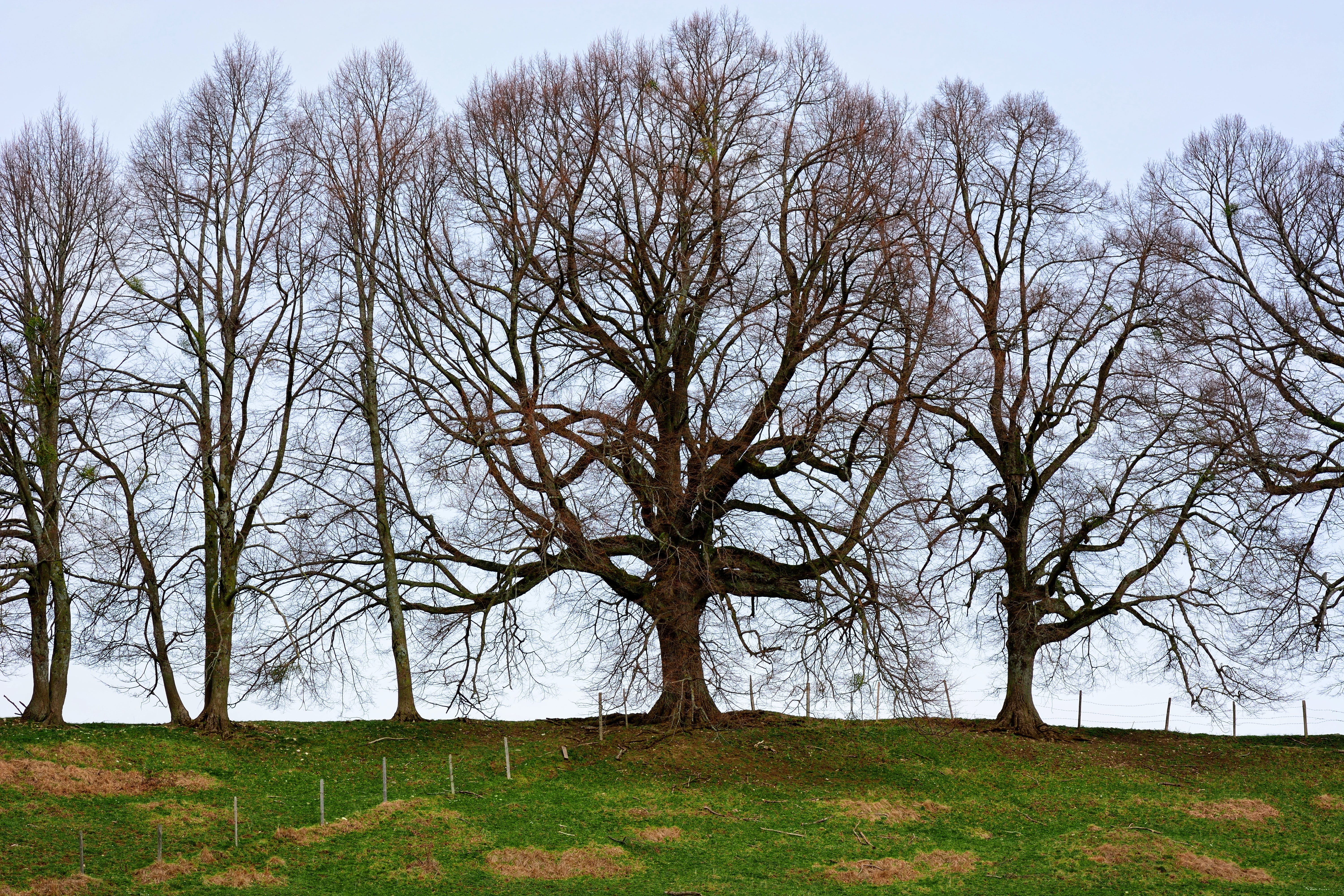 Free stock photo of group, grove of trees, idyll, landscape