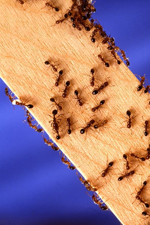 Colony of Ants on Wooden Plank