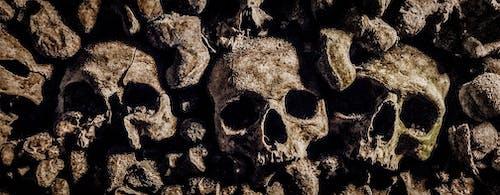 Fotobanka sbezplatnými fotkami na tému catacombes, Francúzsko, lebka, metro