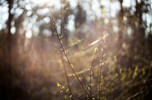 Free stock photo of bokeh, bud, flower buds, flowering