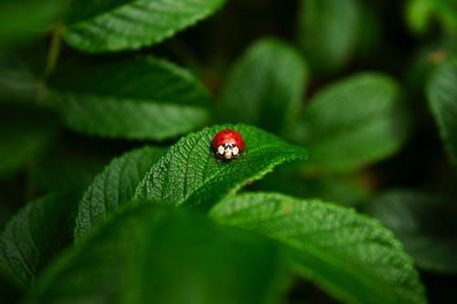 Close-Up Photo of Ladybug on Leaf