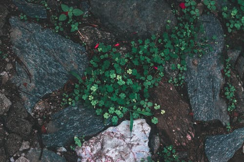 Бесплатное стоковое фото с высохшие лепестки, день, завод, зеленая трава