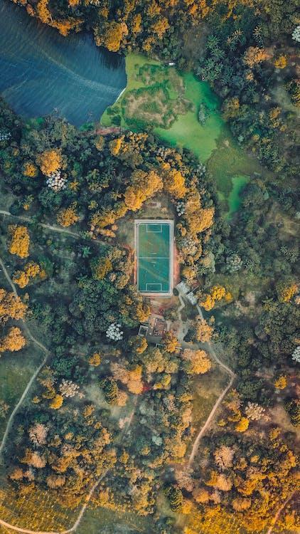 arbres, automne, couleur