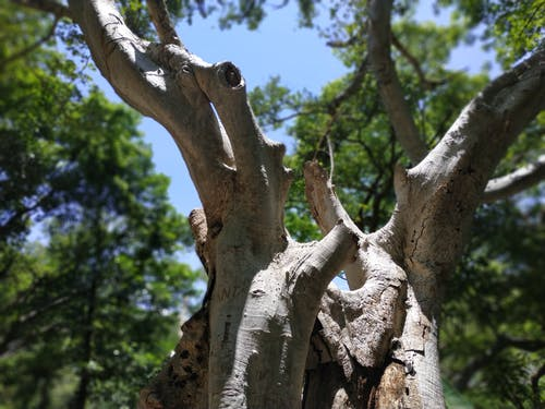 Gratis stockfoto met blauwe lucht, bomen, boom, enorm