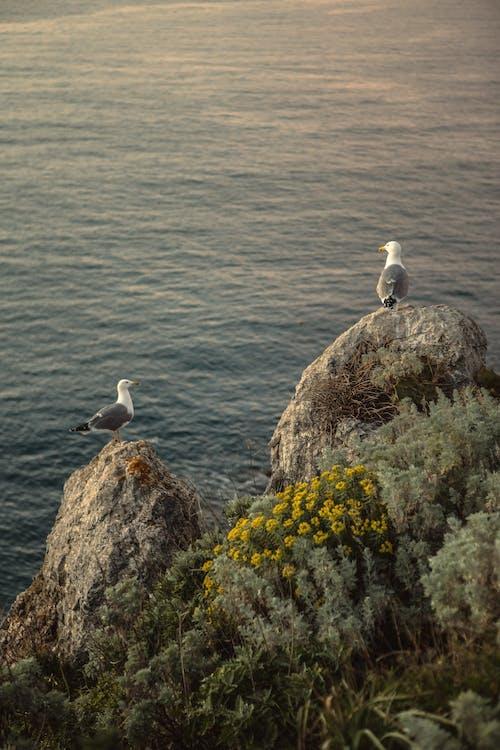 Fotos de stock gratuitas de agua, al aire libre, animal, ave marina