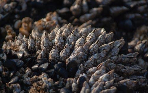 Gratis stockfoto met pranger, waterdier, zeeleven