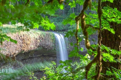Gratis stockfoto met h2o, lente, natuur, watervallen
