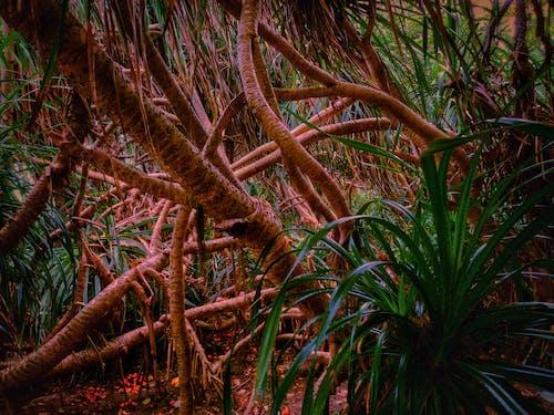 Gratis lagerfoto af grøn, kaktusplanter, skønhed i naturen