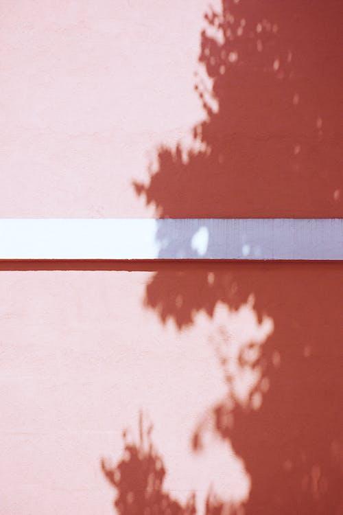 Gratis lagerfoto af dagslys, lys og skygge, skygge, træ