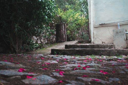 Бесплатное стоковое фото с #челенджнаулице, архитектура, ворота, вход