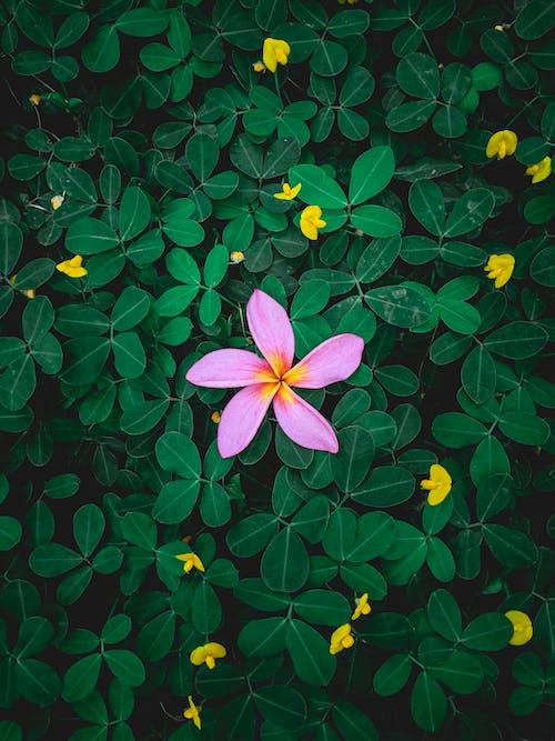 天性, 氛圍, 漆黑, 美麗的花 的 免費圖庫相片