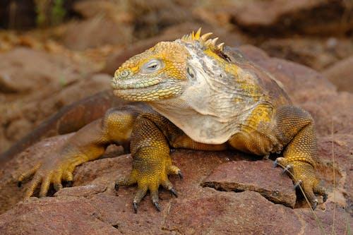 Бесплатное стоковое фото с весы, виды, вымирающие виды, голова