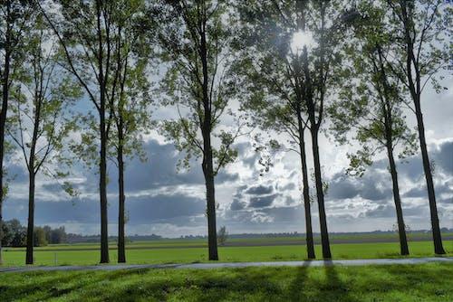 Free stock photo of evening sun, landscape, trees