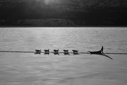 Free pics rowing erotic