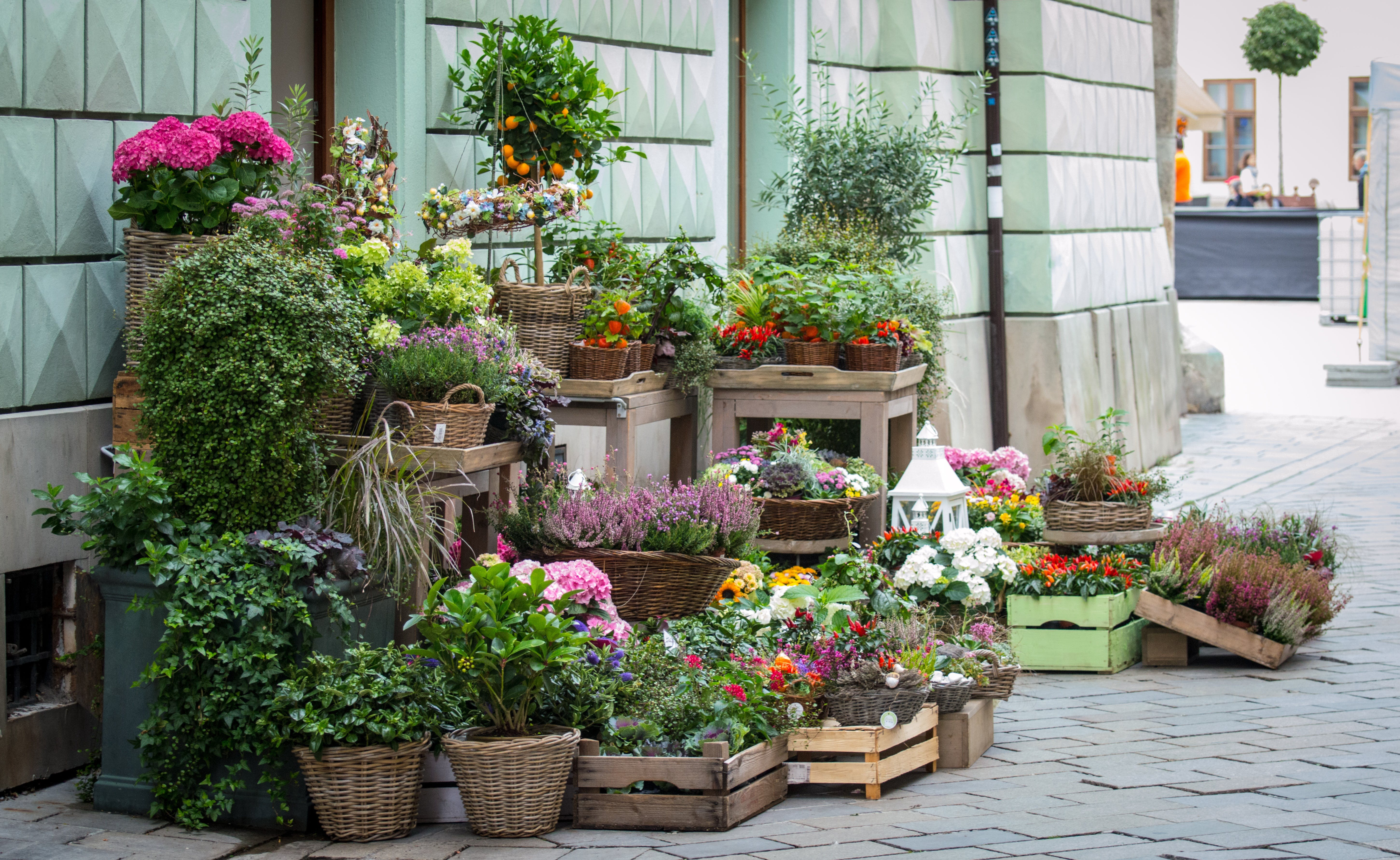 Free stock photo of street, flowers, shop, sale