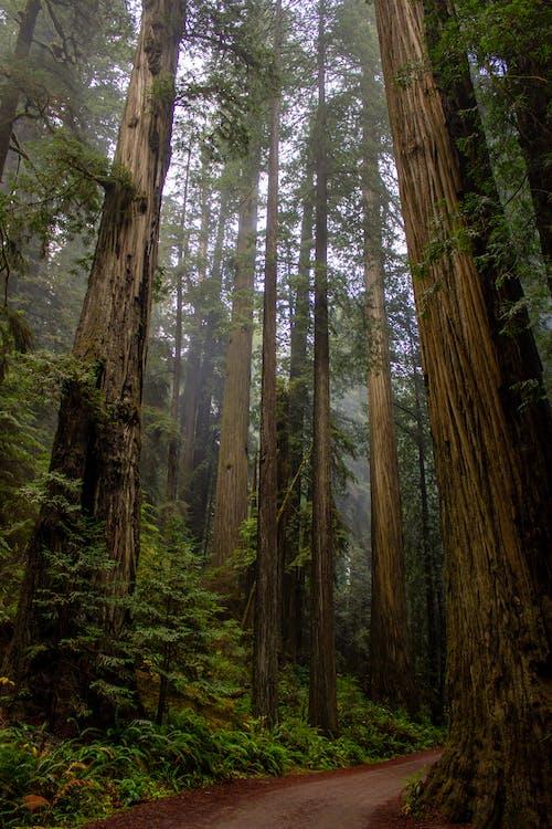 Imagine de stoc gratuită din arbori, cadru, cale