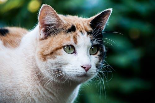 Selective Focus Photo of Cat Head