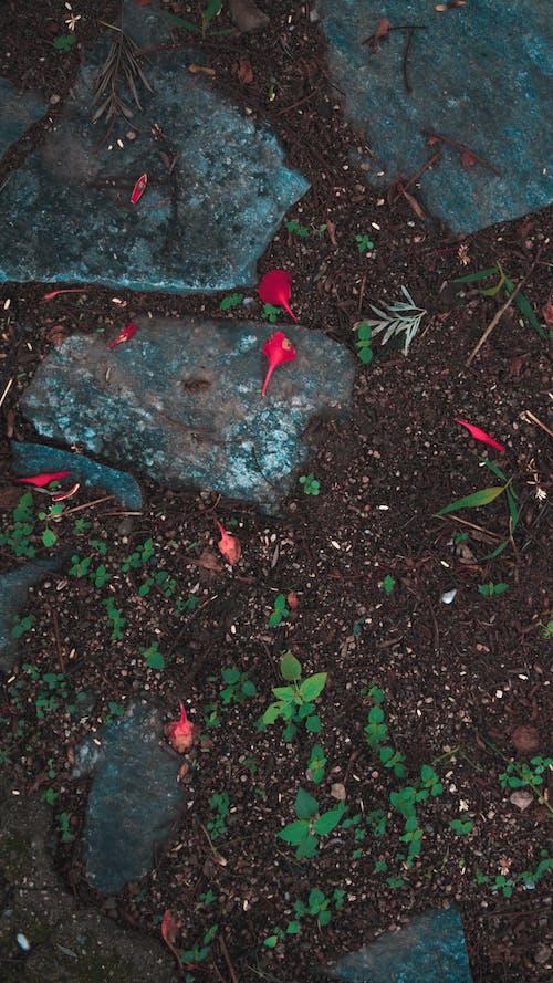 Бесплатное стоковое фото с Гибискус, голубой, день, дерево