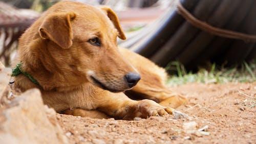 Free stock photo of baby dog
